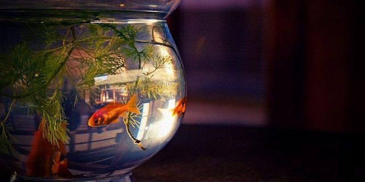 Fish_bowl